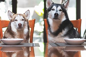 What is human-grade pet food?